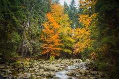 Spindlermühle, Herbst, Bäume, bunte Blätter