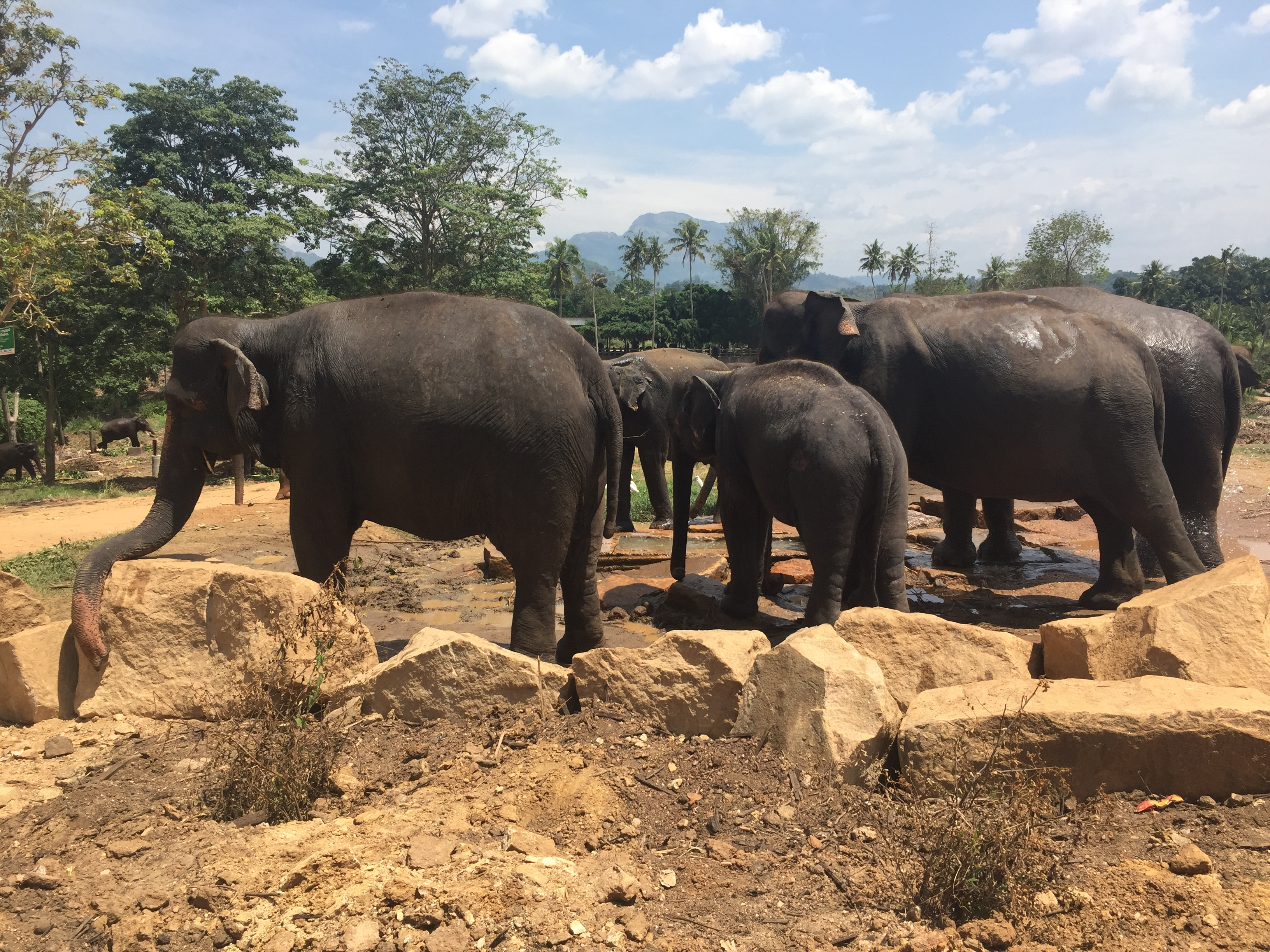Sri Lanka – Impressionen