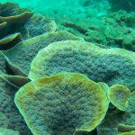 Unterwasserwelt Seychellen