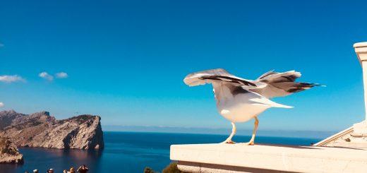 Cap Formentor Möwe Mallorca