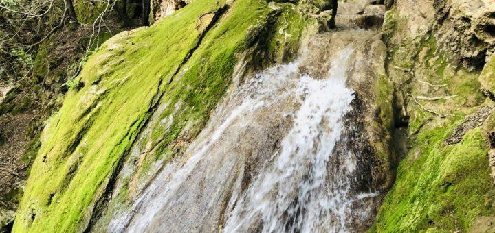 Salt Des Freu - eine Reise In den Märchenwald Mallorcas